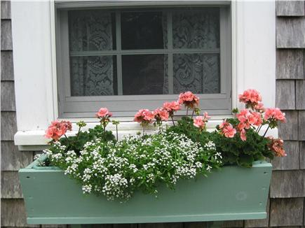 Nantucket town, Historic district in-town Nantucket vacation rental - Flower box